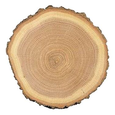 Тарелки  Тарелка деревянный спил напрокат | Аренда и прокат – Санкт-Петербург