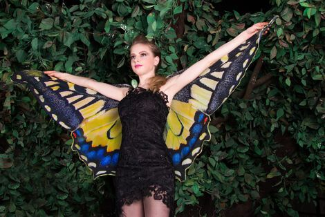Другое Крылья бабочки напрокат | Аренда и прокат – Санкт-Петербург